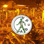 Barcelona Cannabis Club Review: Abcda