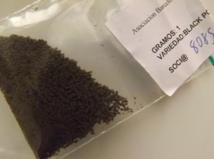 Hash Review - One gram of Black Poison