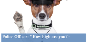 Marijuana Games Image - Cop to the Stoner with Dog