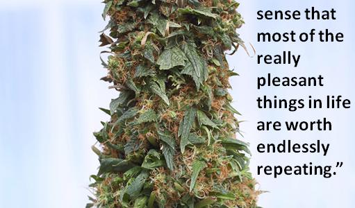 Richard Neville Marijuana quote