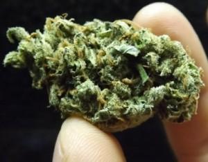 Marijuana Strain Review of Amnesia