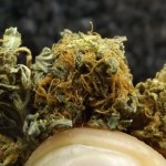 Marijuana Strain Review: Super 7