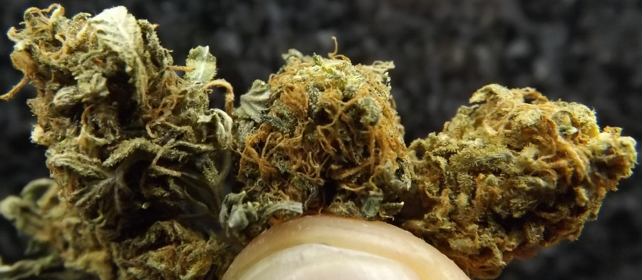 Feature Image Marijuana Strain Review of Super 7