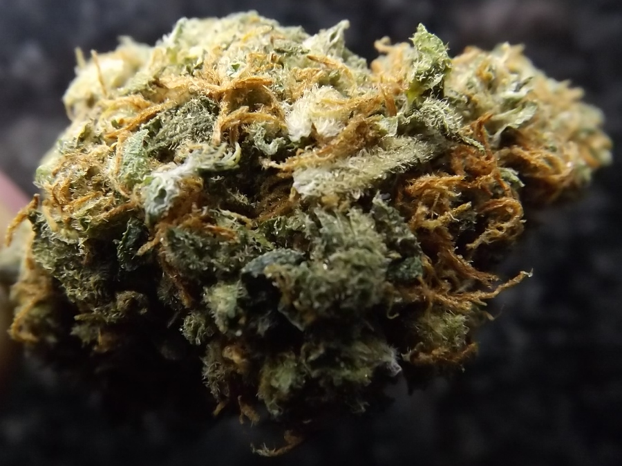 Feature Image for Yumboldt Marijuana Strain Review