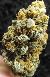 Second closeup of Black Lemon weed strain