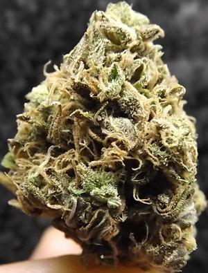 Sweet Dreams Marijuana Strain closeup
