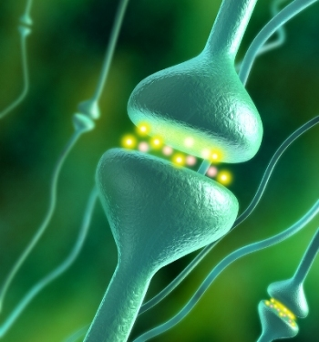 The Endocannabinoid System in Humans Is Older than cannabis