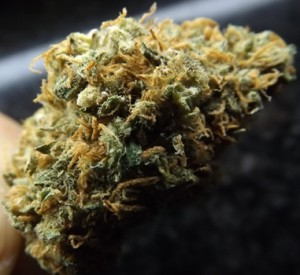 Yumboldt Cannabis Strain - Side View