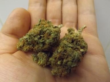 Yumboldt Marijuana Strain in the Hand