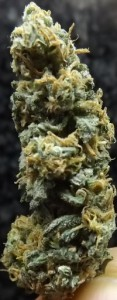 Afghan Kush marijuana strain review closeup shot 1