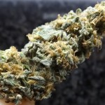 Marijuana Strain Review: Afghan Kush