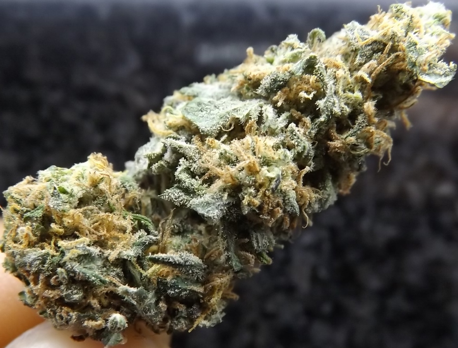 Marijuana Strain Review: Afghan Kush