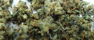 Feature image for marijuana strain review of MK Ultra