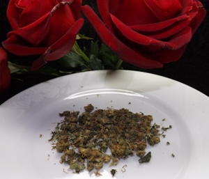 MK Ultra marijuana strain and a couple of roses - Awwwww
