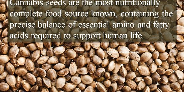 Marijuana Games Image - Cannabis Seeds Food Source 600x428