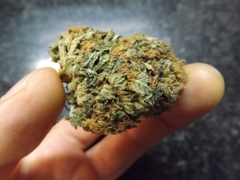 Side view of a bud of Nuken cannabis strain