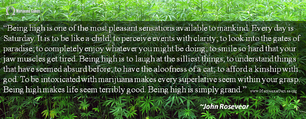 600x Marijuana Quote by John Rosevear