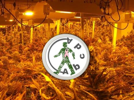 Abcda Cannabis Club in Barcelona