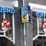 Amsterdam Coffeeshop Review: Bluebird