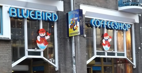 Feature Image for Amsterdam Coffeeshop Review of Bluebird