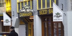 Feature image for review of ASG seed bank in Amsterdam