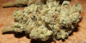 Feature Image for Violator Kush Strain Review