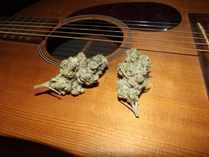 Martin Guitar and Violator Kush