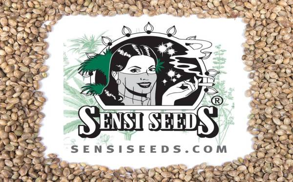Safeguarding Cannabis Seed Banks: One Company's Rebellion