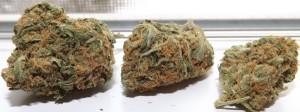 3 buds of Blue Caramel Dream