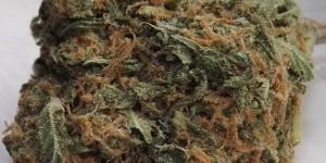 Blue Caramel Dream strain feature image