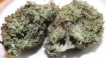 Marijuana Strain Review: LA Blue