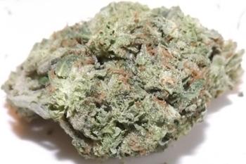 LA Blue cannabis strain closeup no 1