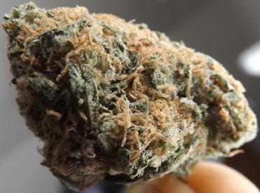 Macro no 2 of Blue Caramel Dream cannabis strain