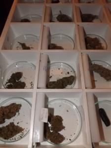 Marijuana Selection at RDM