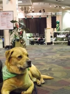 Dog in Green Bandana at the Cannabis Cup in Denver