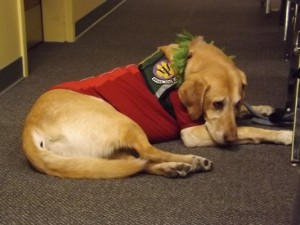 Service dog at the veterans meeting, High Times Cannabis Cup