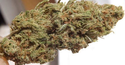 Marijuana Strain Review: Blue Dream |