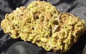Awesome closeup of the Platinum OG strain