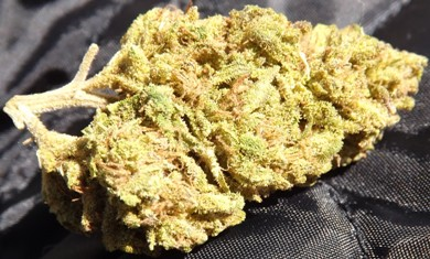 Closeup of Platinum OG no 3