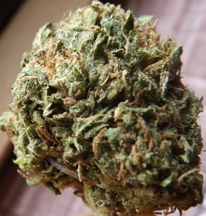Closeup number 2 of the Twitter weed strain