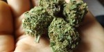 Marijuana Strain Review: Twitter