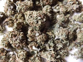 Pile o Twitter weed