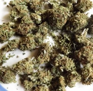 The Twitter marijuana strain from afar