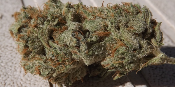 Feature image for strain review of Silvias Blue