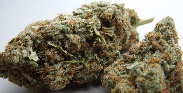 Choko Marijuana Strain Review Feature Image