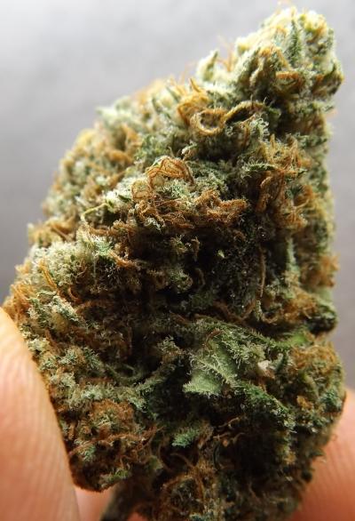 Choko Marijuana Strain Vertical Photo 1