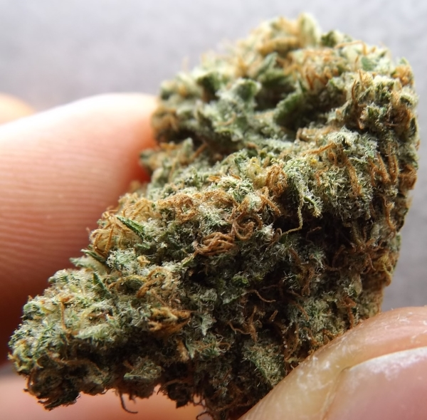 Choko weed strain full closeup with thumb