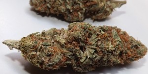 Feature Image for Zombie Kush Strain Review