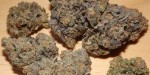 Oregon Huckleberry Marijuana Strain Review
