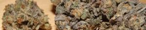Slider Image for Huckleberry Marijuana Strain Review